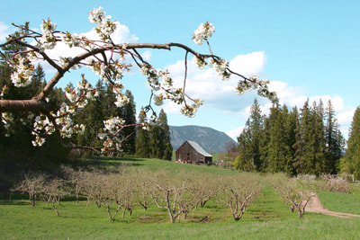 The orchard blossoms at Farmstrong Cidery are the perfect natural wedding decor.